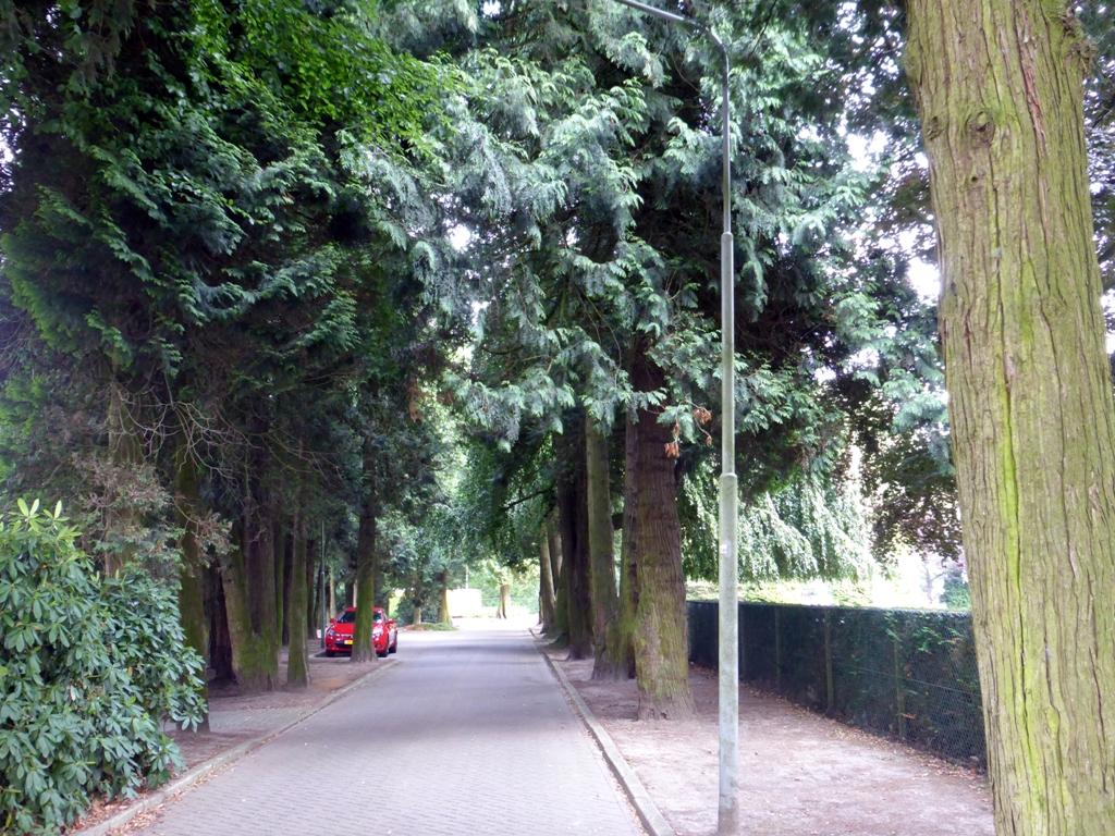 http://bomenbelang.nl/wp-content/uploads/2013/10/Thuja-2-Hengeloo.jpg