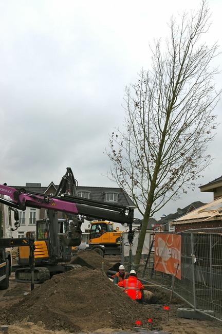 Eind november zijn twee extra bomen (scharlakeneiken) geplant op het marktplein van Vorden. Met deze bomen komt de gemeente een belofte na aan Vereniging Bomenbelang uit 2006. De scharlakeneiken zijn in feite de compensatie van de twee Amerikaanse eiken die tot in het begin van deze eeuw op hetzelfde marktplein stonden (foto: Hans Thijssen).