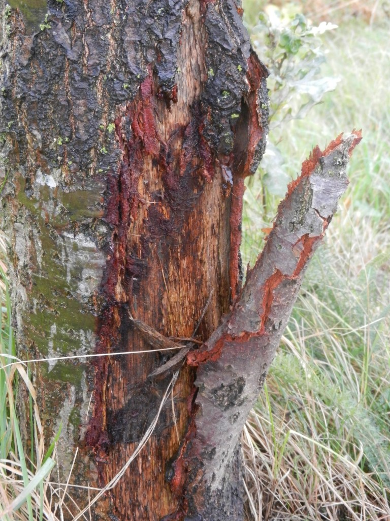 Schade aan bomen (3)