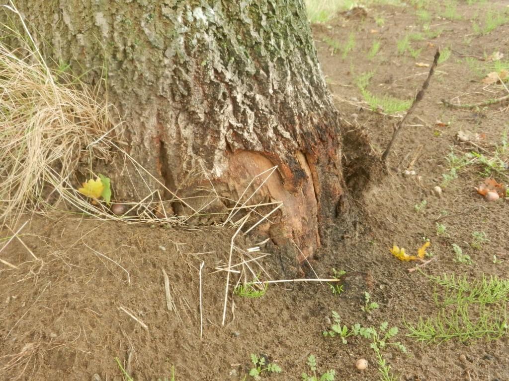 Schade aan bomen (5)
