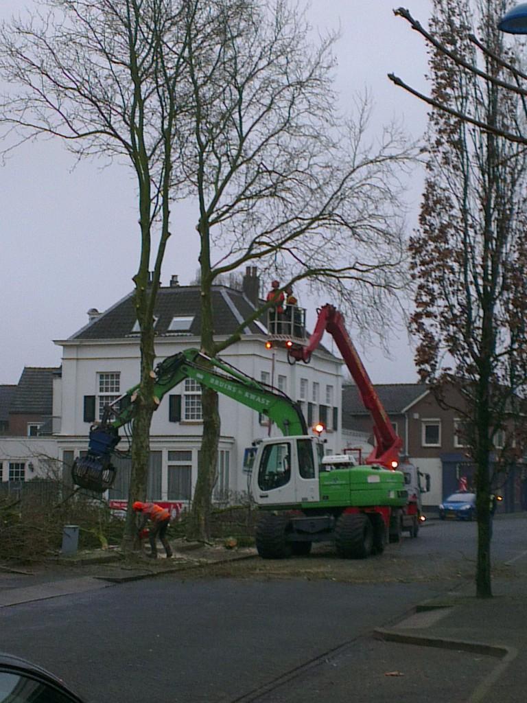 Op de eerste maandag van 2013 werden in een fors tempo alle platanen aan de Zutphenseweg weggehaald. Alleen drie platanen die op particulier terrein stonden, bleven gespaard.