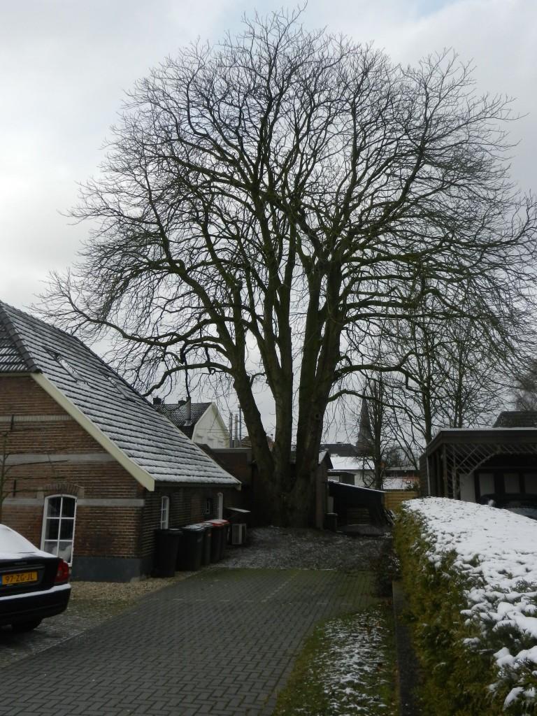 In februari 2013 is aan de Stationsstraat in Vorden een monumentale kastanjeboom gekapt omdat deze problemen zou veroorzaken aan de riolering.