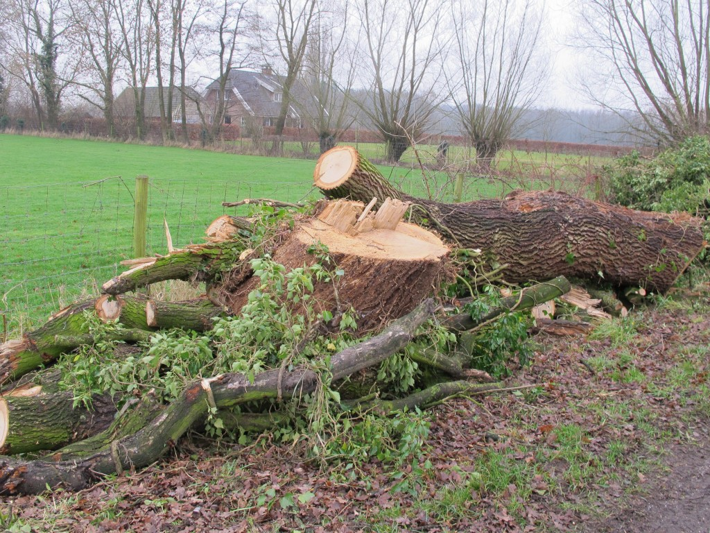 Kappen van bomen (2)