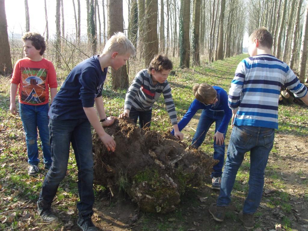 De oudste leerlingen van de Piersonschool in Hengelo moesten tijdens Boomfeestdag ook enkele boomstobben op het campingterrein aan de Lankhorsterweg verwijderen (foto's: Bertien Ensing).