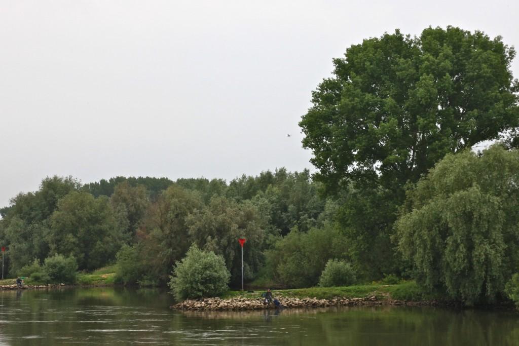 Maar behalve bomen ziet Rijkswaterstaat liefst ook geen struikgewas meer in de uiterwaarden (foto: Hans Thijssen).