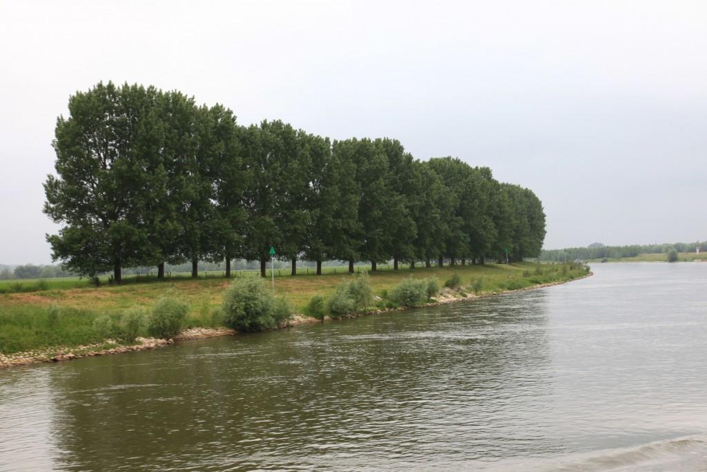 Rijkswaterstaat wil bomenrijen langs de IJssel kappen (foto: Hans Thijssen).