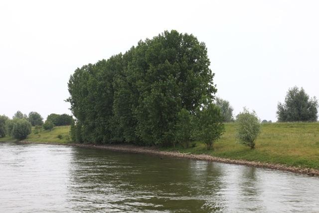 De uiterwaarden van de IJssel op dit moment