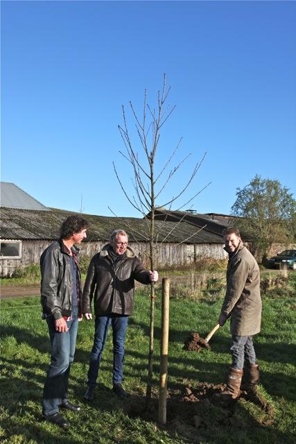 Wethouder Engels plant samen met initiatiefnemer van '1 boom mot kun'n' Anton Stortelder de eerste paardenkastanje. Links de eigenaar van het perceel (foto: Hans Thijssen).