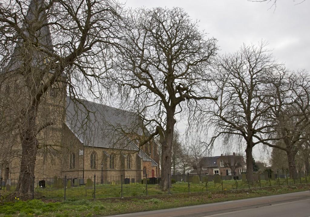 Als het aan de gemeente ligt, worden alle 7 kastanjebomen voor de kerk in Drempt gekapt. Het merendeel van de bomen is echter nog gezond en vitaal (foto: Hans Thijssen).