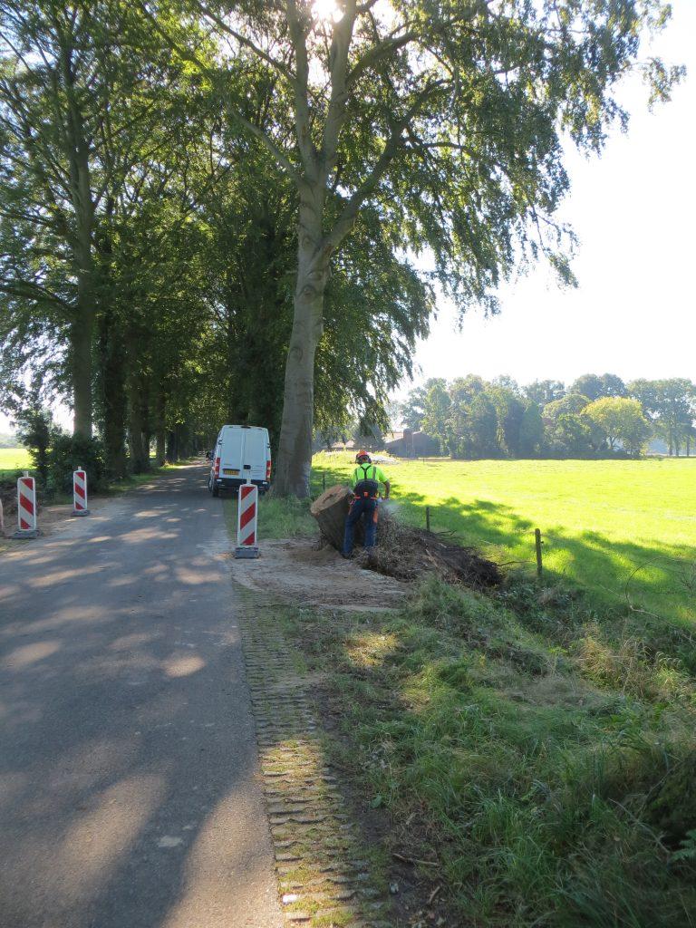 Ook aan de Schuttestraat blies de windhoos enkele bomen om.