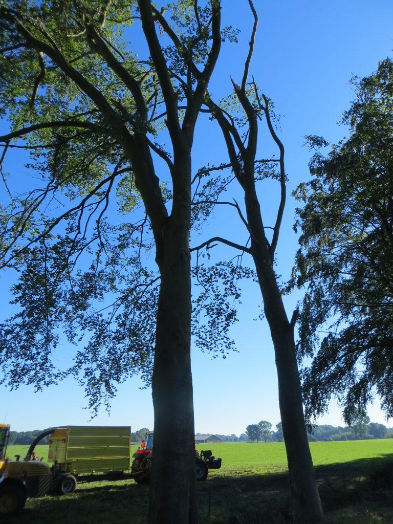 De bomen in de buurt verloren een groot deel van hun takken.