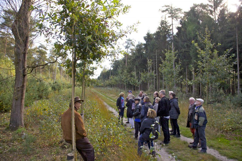 In het nog vrij jonge landgoed 't Waliën heeft Natuurmonumenten de afgelopen jaren verschillende nieuwe lanen met inlandse eiken geplant (foto: Hans Thijssen).