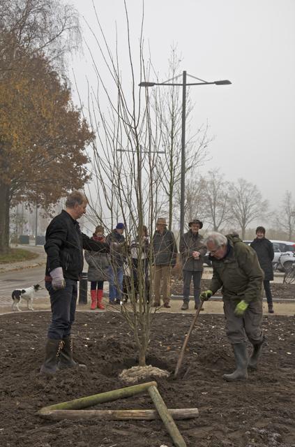 foto: Hans Thijssen, Vereniging Bomenbelang