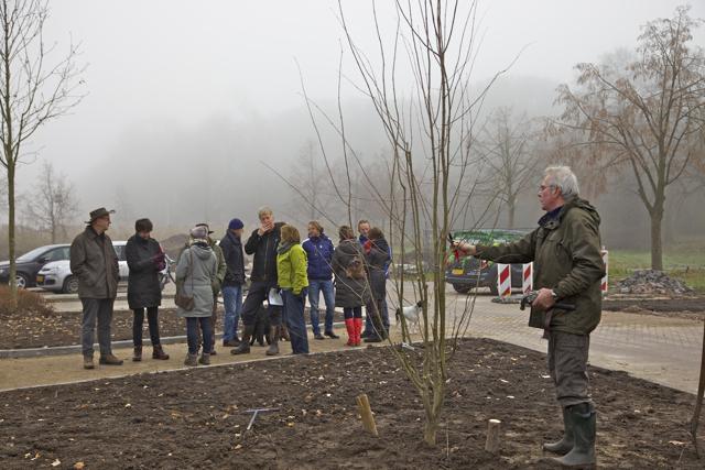 Bestuurslid Joost Bakker snoeit de katsoeraboom nog wat bij.