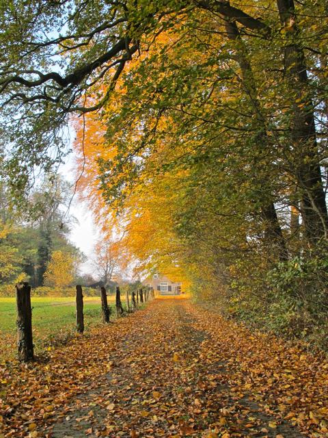 Herfst in de omgeving van kasteel Hackfort in Vorden (foto's: Hans Thijssen).