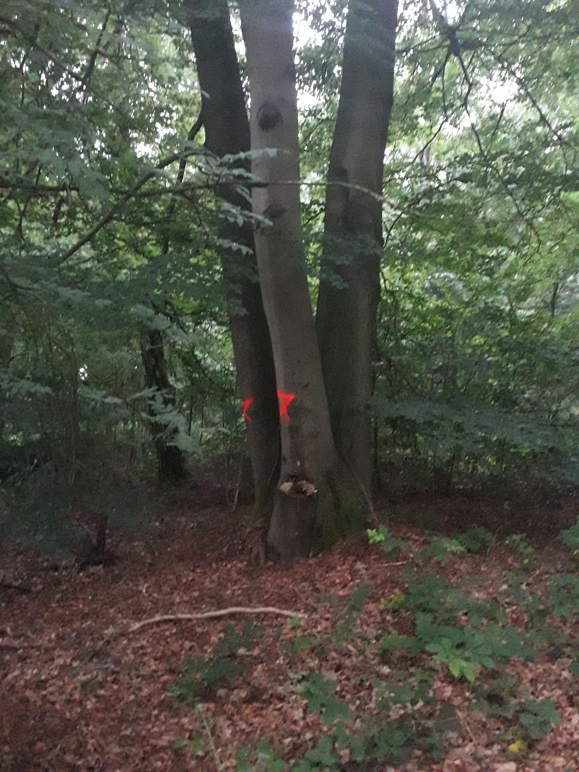 toppen van bomen